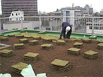 屋上緑化 芝生 施工中