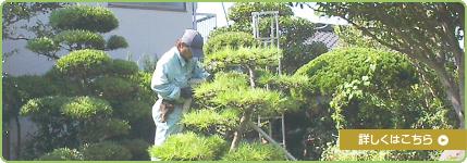 植木の剪定からガーデニングまで